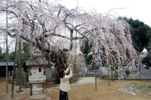 20160401sakura